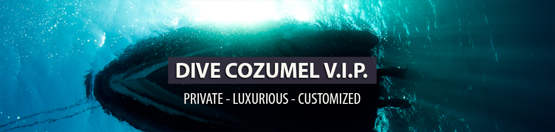 Private Scuba diving, VIP scuba diving in Cozumel, luxury scuba diving, private dive guide, expert dive guide, specialised dive guide, private diving, customised personalised scuba diving trips, worlds best diving
